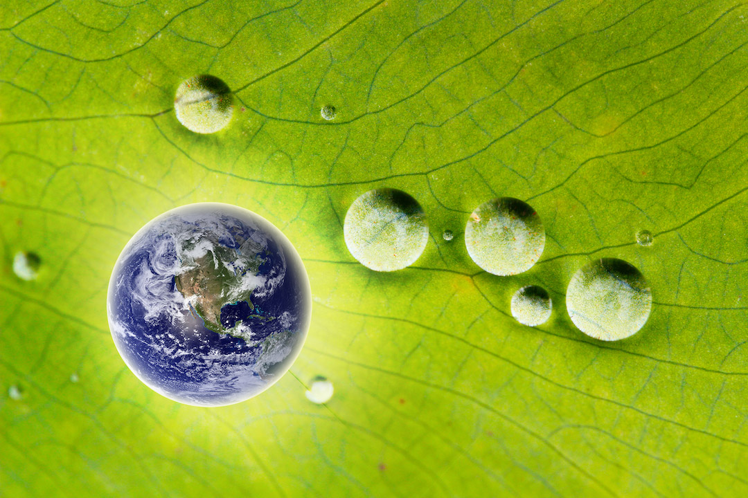 earth with water droplets on leaf